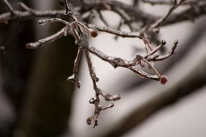 Winter Branches 01 by Cinestress
