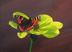 Tortoiseshell Butterfly on a Dahlia Flower by eastcorkpainter