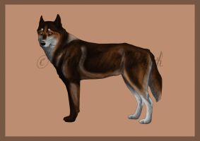 Commission: Siberian Husky design by Maranez