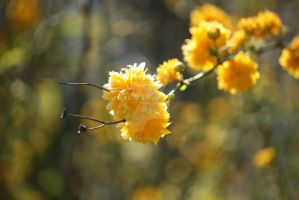 yellow april by Rheis