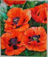Poppies by Jam1992
