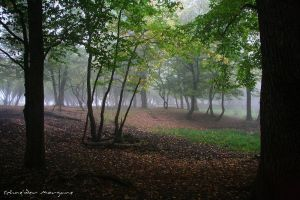The Enchanted Forest by MorganeS-Photographe
