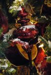 Lormet-Xmas-Decor-0774E-sml by Lormet-Images