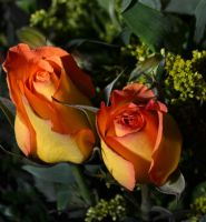 Roses for the ladies!!!! by TomKilbane