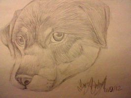 Rottweiler drawing by Freeze-pop88