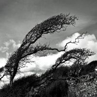 Carrick: WindTree by Coigach