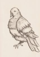 Pigeon Sketch by insanity-eternal