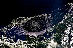 Spiderweb by Jantiff-Stocks