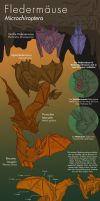 Info Graphic: Bats by Antihelios