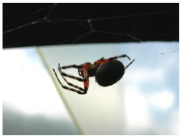 itsi bitsi spider by tomegatherion