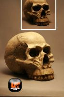 Unrestricted Skull Stock by Unrestricted-Stock