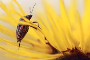 loving yellow by Viand