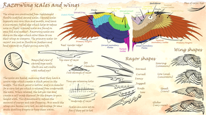 Razorwing scaled wing anatomy by Sezaii