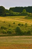 Farthing Downs Lines by andy1349