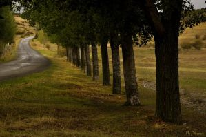 The road by Mr-Vicent