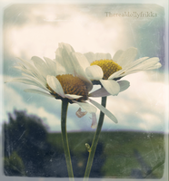 Daisies by ThErEaLDoLLyFrikka
