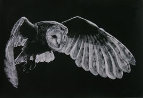 Barn Owl by tibblek94