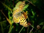 yellow butterfly by edida12