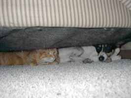 There's a Cat and Dog Hiding by Flame22