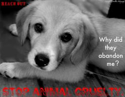 Reach out: Stop Animal Cruelty by kawrtnai