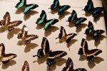 moths and butterflies stock141 by hatestock