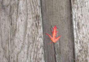 red Leaf in Franklin, Pa. by Buhla