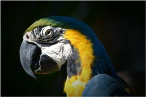 Parrot 02 by Skip1967