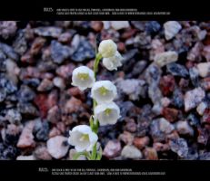 Lily of the valley 2 by Mithgariel-stock