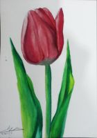 Tulip - Water Colors Practicing by A-Man-With-No-Art