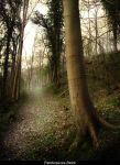 Forest 20 by AnitaJoy-Stock
