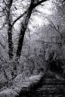 Icy Path 4 by Art-Photo