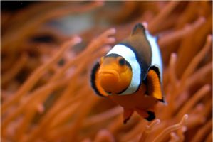 Not Nemo by x-crossroad