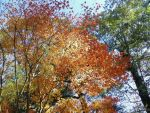 Fall leaves by lord-of-lighitning92
