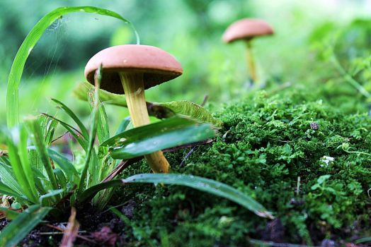 Mushrooms 1 by maskedsilhouette