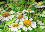 Daisies Gathering by Thricelight