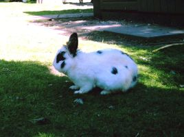 Bunny2 Stock by PVS by pixievamp-stock