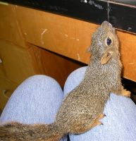 Baby squirrel 06 by CotyStock