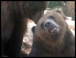 Grizzly Bears by CrazyBatty