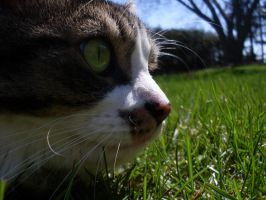 Oliver in the Grass by GarfieldP