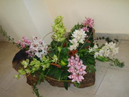 All of cymbidiums by kate44
