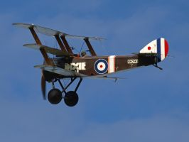 Sopwith Triplane 3 by davepphotographer