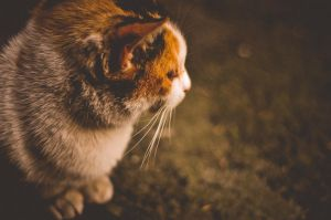 lonely cat) by Ariadnaway