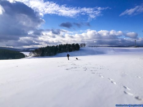 Snowy Landscape - my husky and me on tour by Borg124