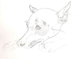 A quick portrait of my dog. by CoKra