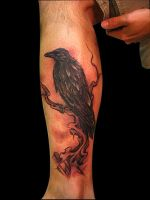 crow by TonyGoeke