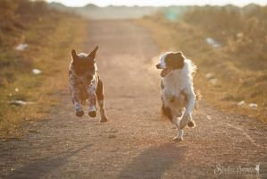 The Great Race by ShelleyVPhoto