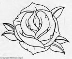 Rose 1 by Melissa-Capo