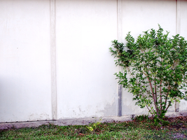 Garage wall with bush by DarkenedHeart-Stock