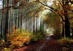 Cycling in the magic forest by jchanders