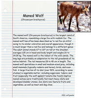 Maned Wolf by sofijasoler